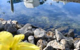 seabridge marina